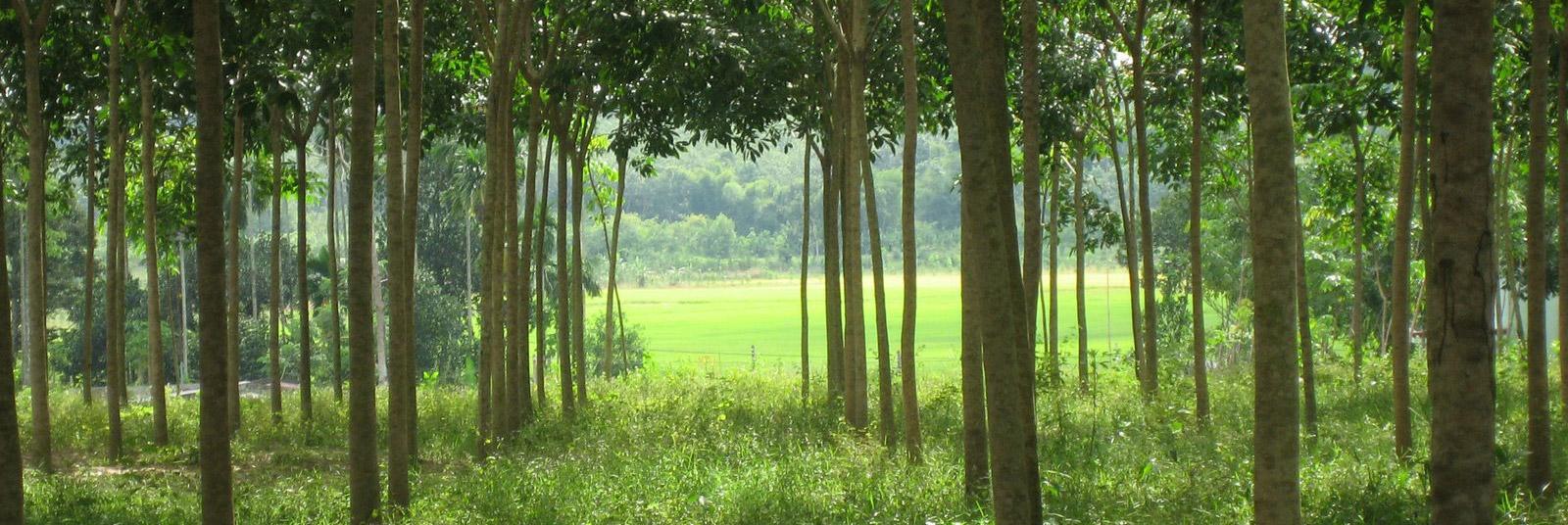 Hevea - ekologický materiál